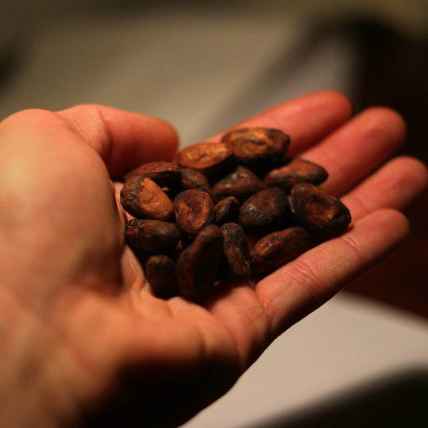 fève de cacao brut